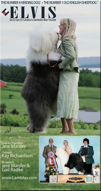 lambluv com - Home of Lambluv Old English Sheepdogs