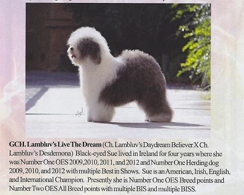 lambluv com - Home of Lambluv Old English Sheepdogs